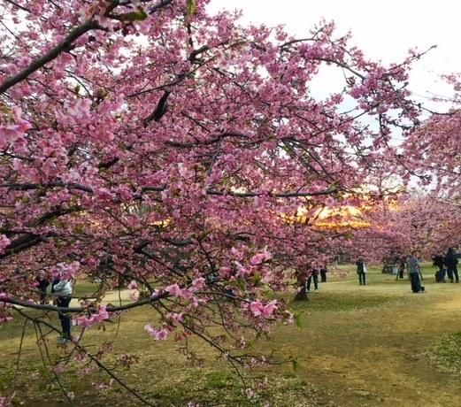 Sunset feat. Sakura